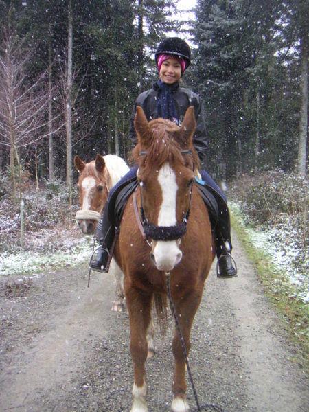 Pferd Reiten Lernen Pferd zu Sitzen Und Lernen
