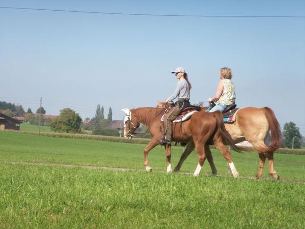 meine pferde offenstall reitbeteiligung westernreiten. Black Bedroom Furniture Sets. Home Design Ideas